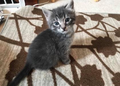 Dusty-Pending Adoption