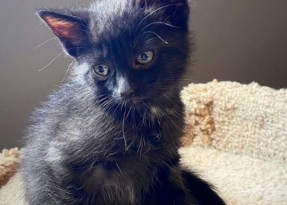 Mac-Kitten