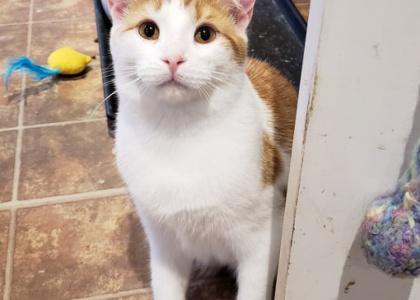 Desmond-Kitten