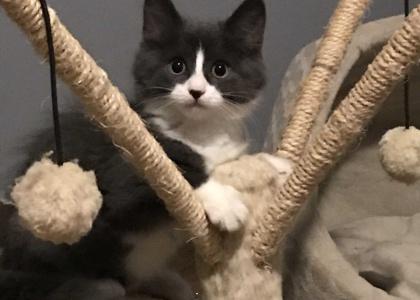 Milo-Kitten