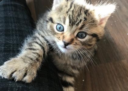 Millie-Kitten