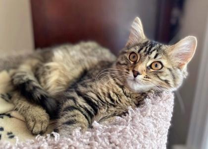 Coraline-Kitten