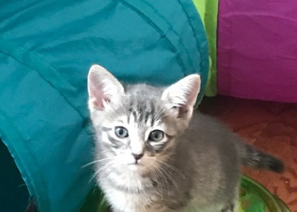 Cinder-Kitten