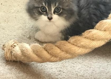 Arlo-Kitten