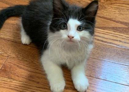 Spice-Kitten