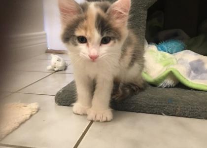 Lois-Kitten