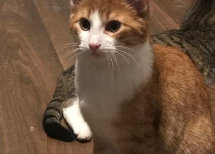 Red-Kitten