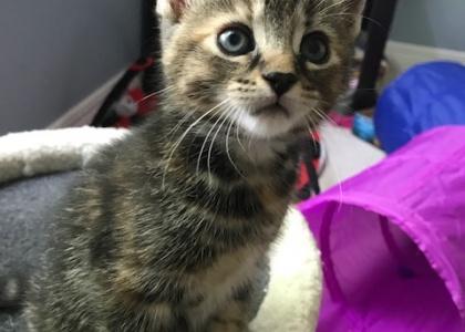 Peaches-Kitten