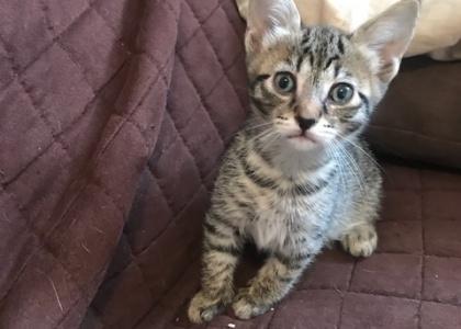 Ariel--Kitten