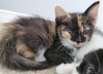 Mocha-Kitten