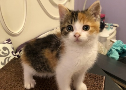 Sunshine-Kitten