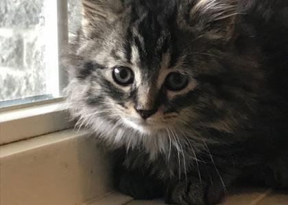 Febe-Kitten