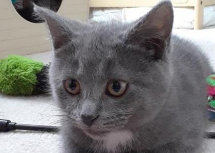 Debbie- Kitten