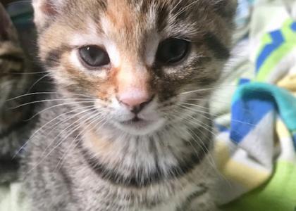 Maggie-Kitten
