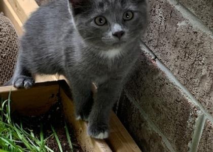 Bandit-Kitten