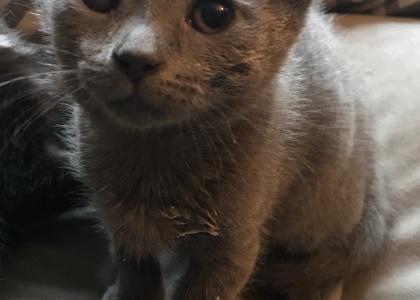Robbie-Kitten