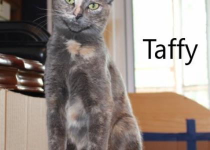Taffy-Adult