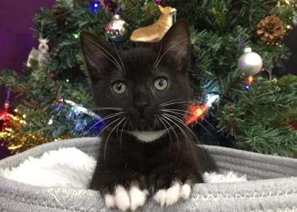 Po-Kitten