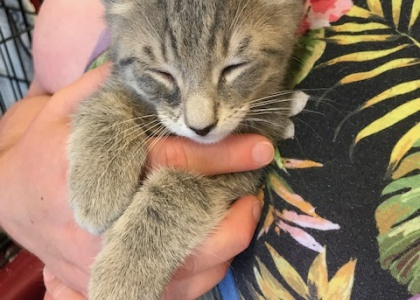 Sebastian-Kitten