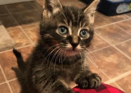Corona-Kitten