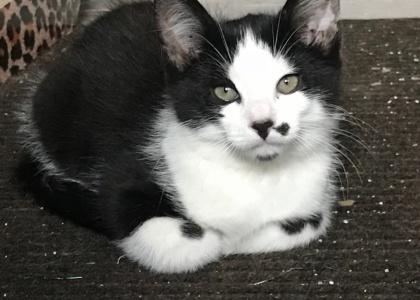 Tux-Kitten
