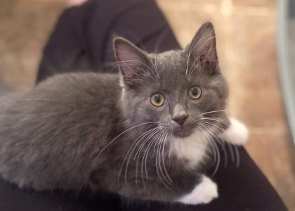 Phoenix-Kitten