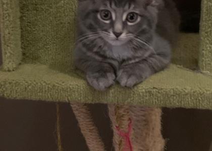 Mia- Kitten