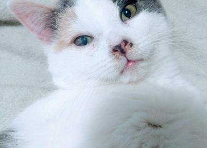 Zoe-Kitten