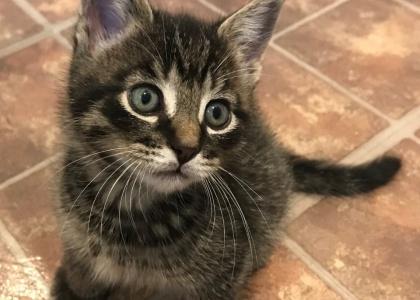 Rum-Kitten