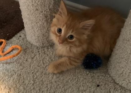 Waffles-Kitten