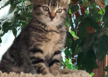 Monty- Kitten