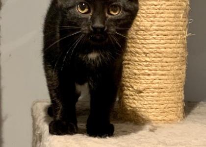 Bo-Kitten