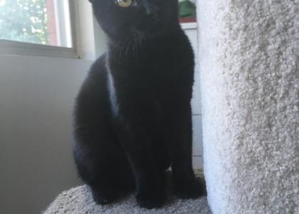 Sweetie-Kitten