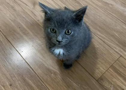 Taz-Kitten