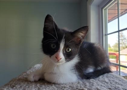 Sheena-Kitten