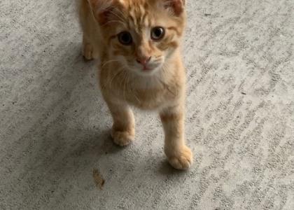 Clyde-Kitten