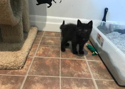Hailie-Kitten