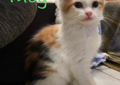 Meg-Kitten