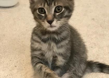 Twizzler-Kitten
