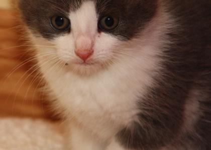 Willa-Kitten