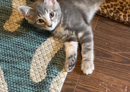 Billy-Kitten