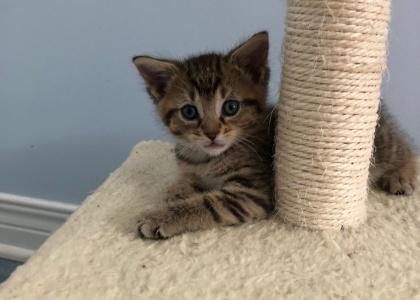 Lillian-Kitten