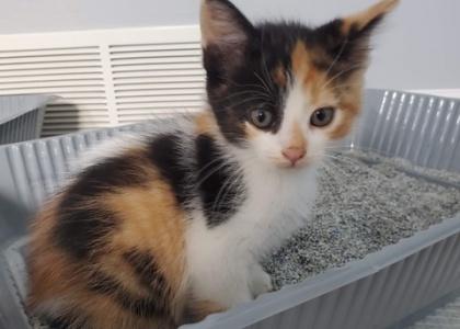Marble-Kitten