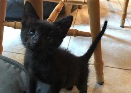 Stevie-Kitten
