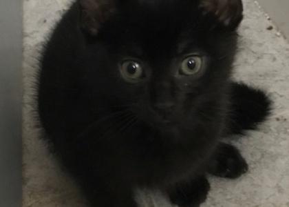 Taco-Kitten