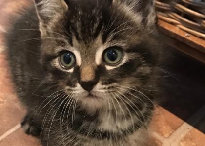 Whiskey-Kitten