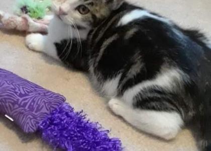 Pat- Kitten