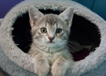 Sadie-Kitten