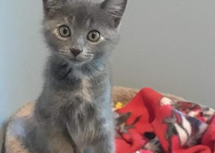 Skittles- Kitten
