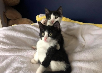 Bonnie and Clyde-Kittens